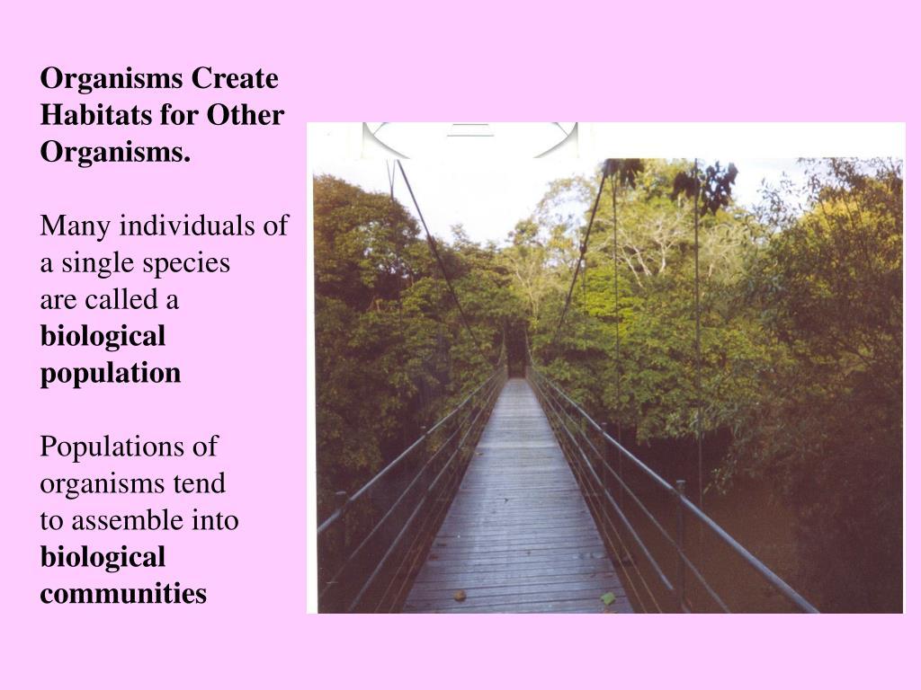 Organisms Create