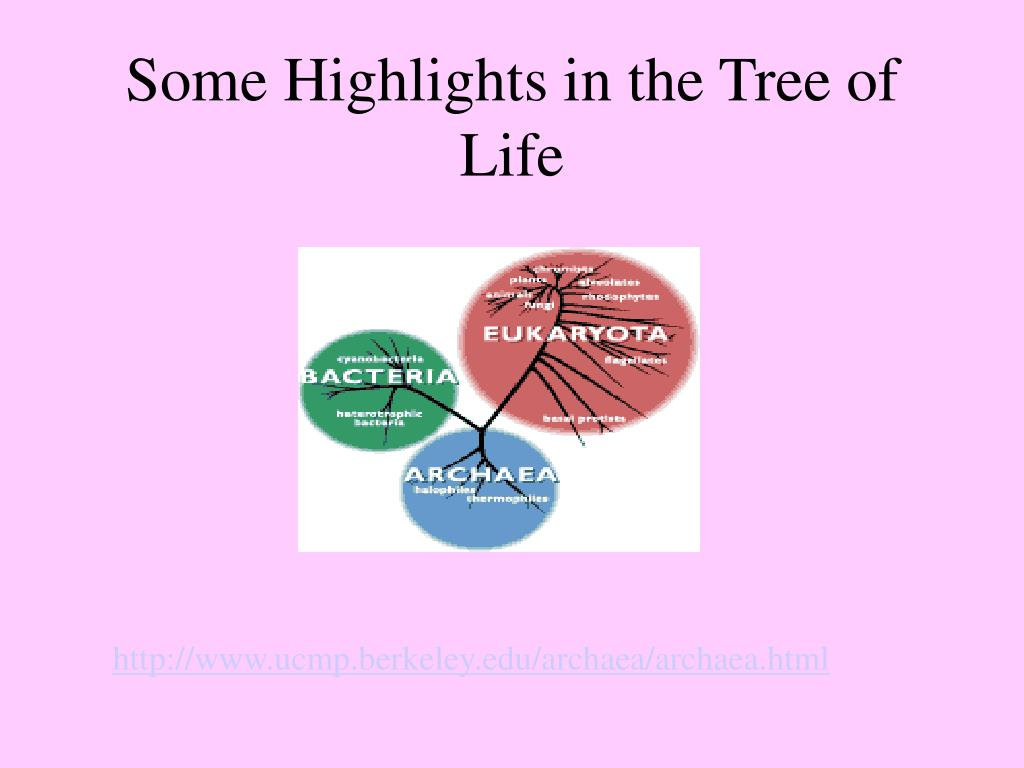 Some Highlights in the Tree of Life