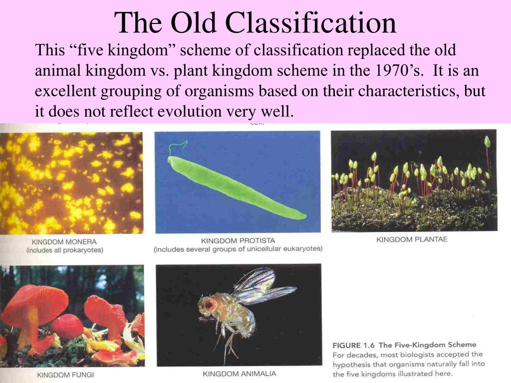 The Old Classification