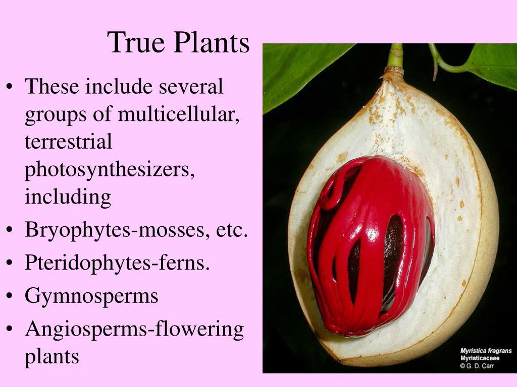True Plants