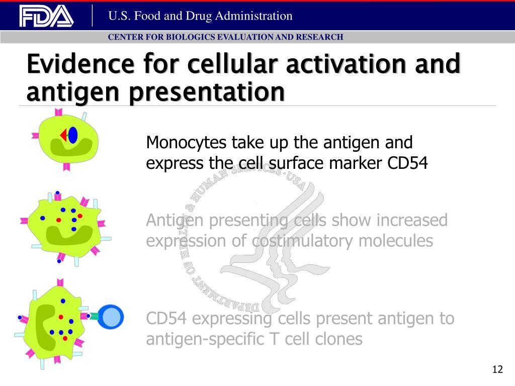 Evidence for cellular activation and antigen presentation