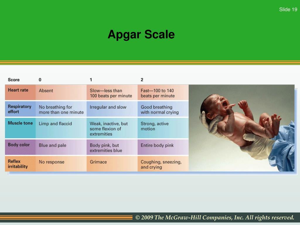 Apgar Scale