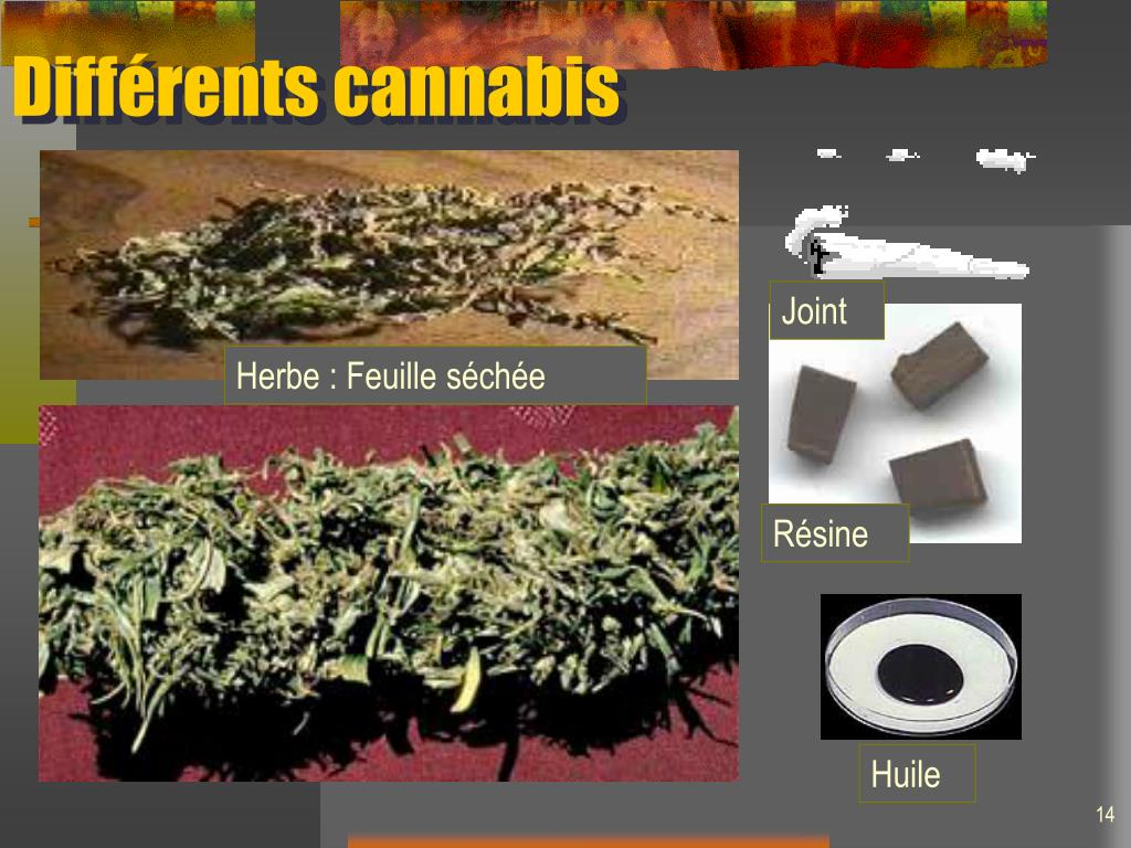 Différents cannabis