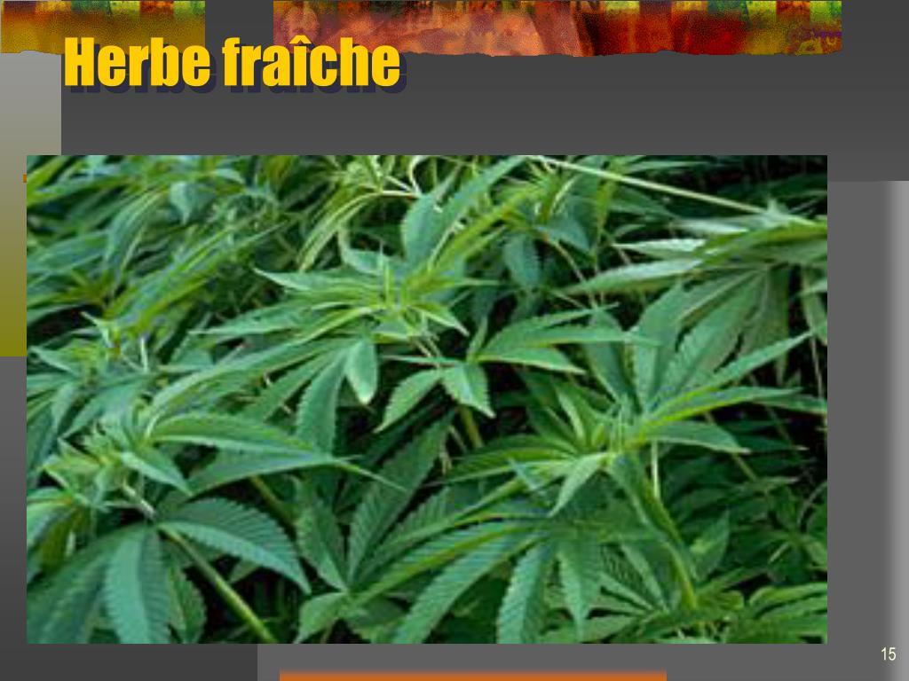 Herbe fraîche