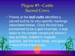 plague 5 cattle sacred cows