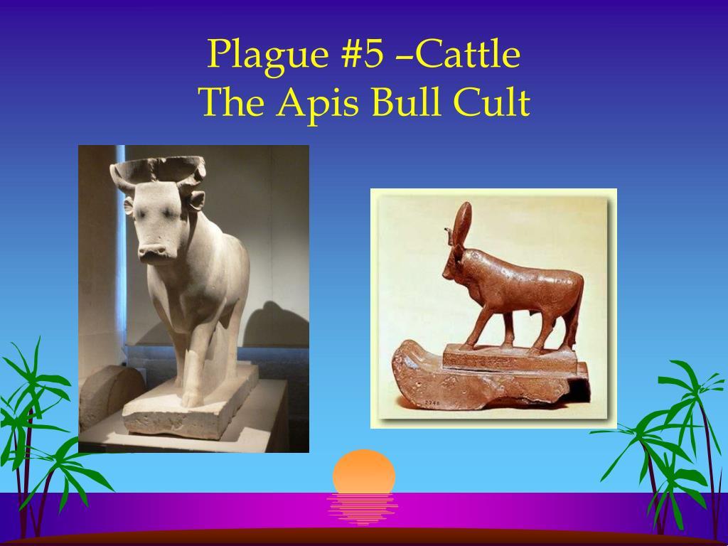 Plague #5 –Cattle