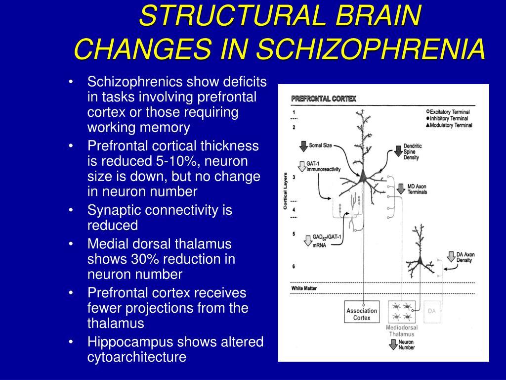STRUCTURAL BRAIN CHANGES IN SCHIZOPHRENIA