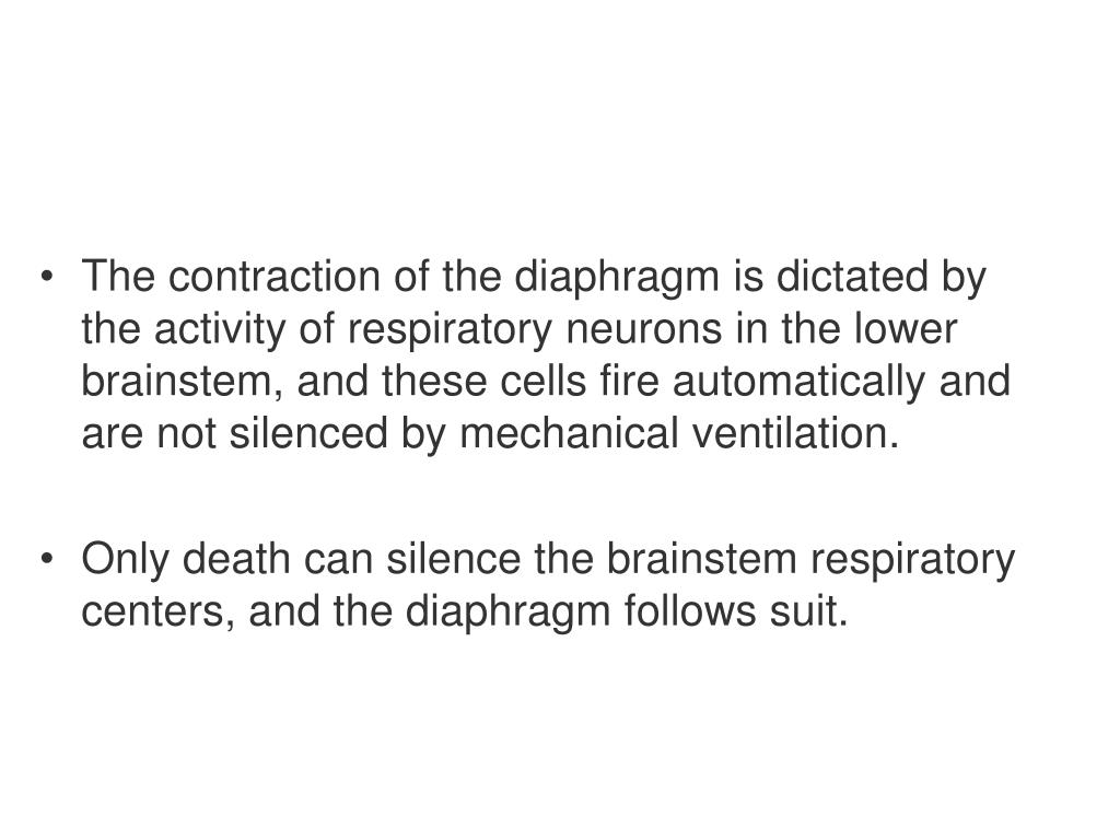 The contraction of the diaphragm is dictated by the activity of respiratory neurons in the lower brainstem, and these cells fire automatically and are not silenced by mechanical ventilation.