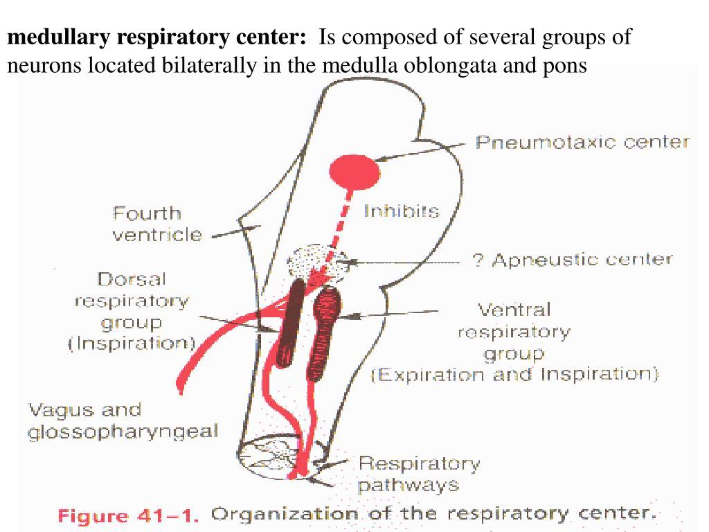medullary respiratory center: