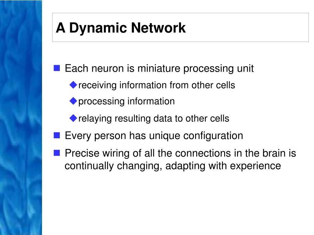A Dynamic Network