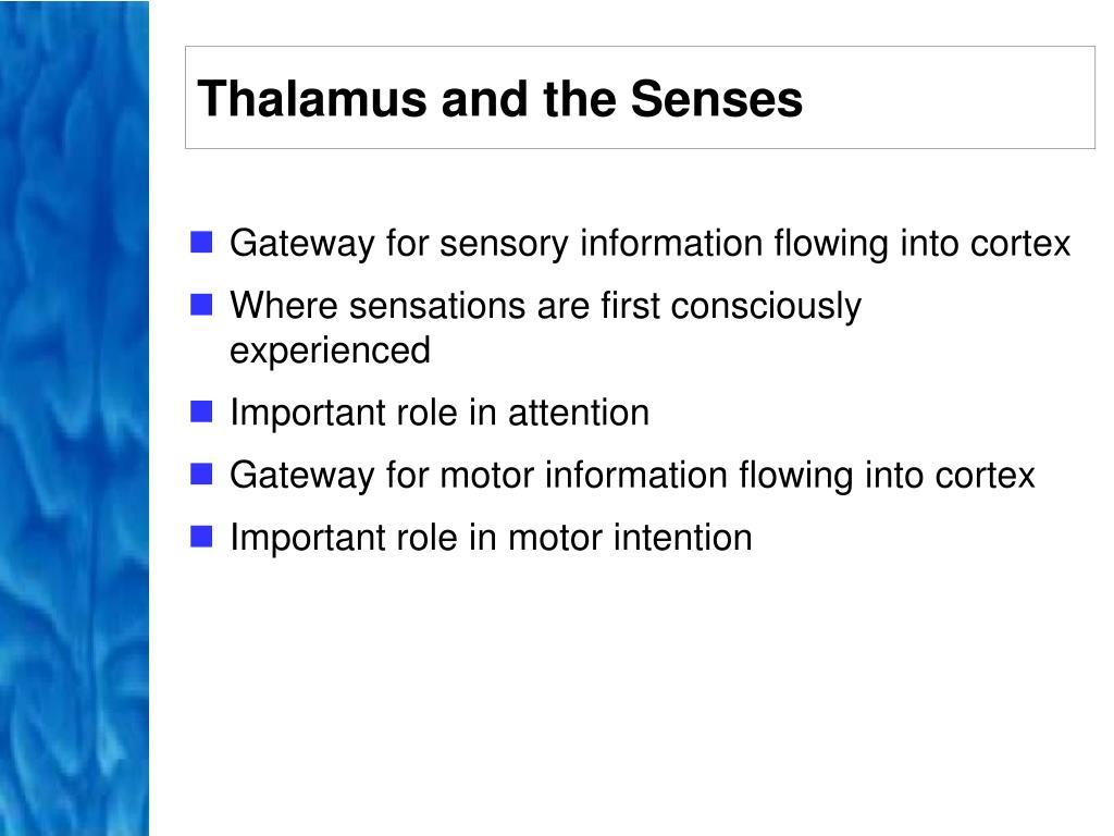 Thalamus and the Senses