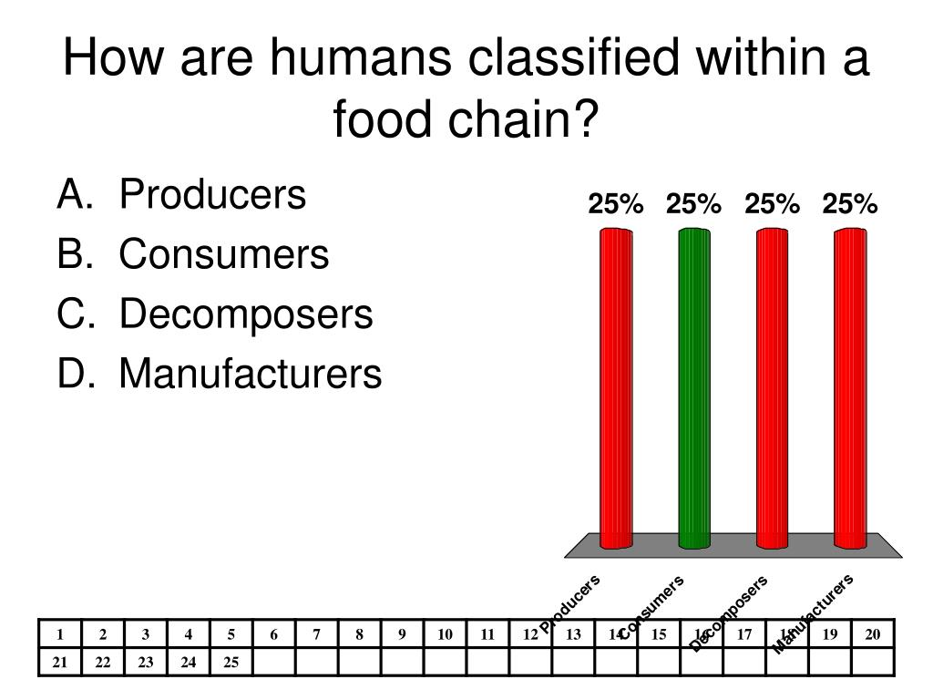 How are humans classified within a