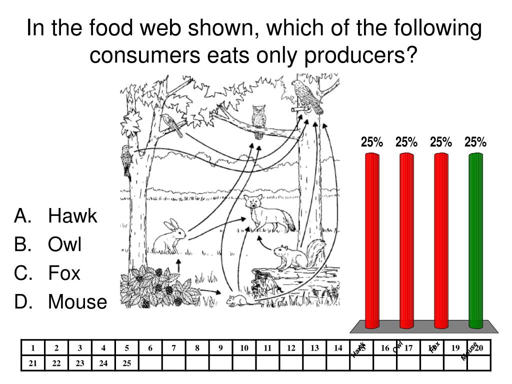 In the food web shown, which of the following consumers eats only producers?