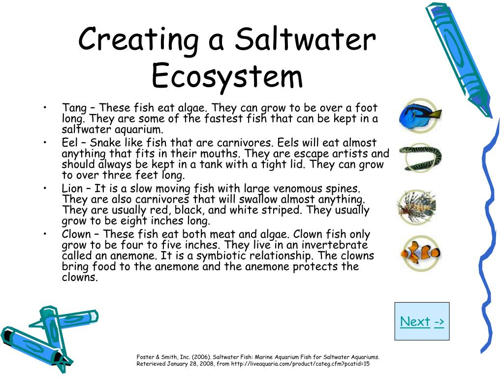 Creating a Saltwater Ecosystem