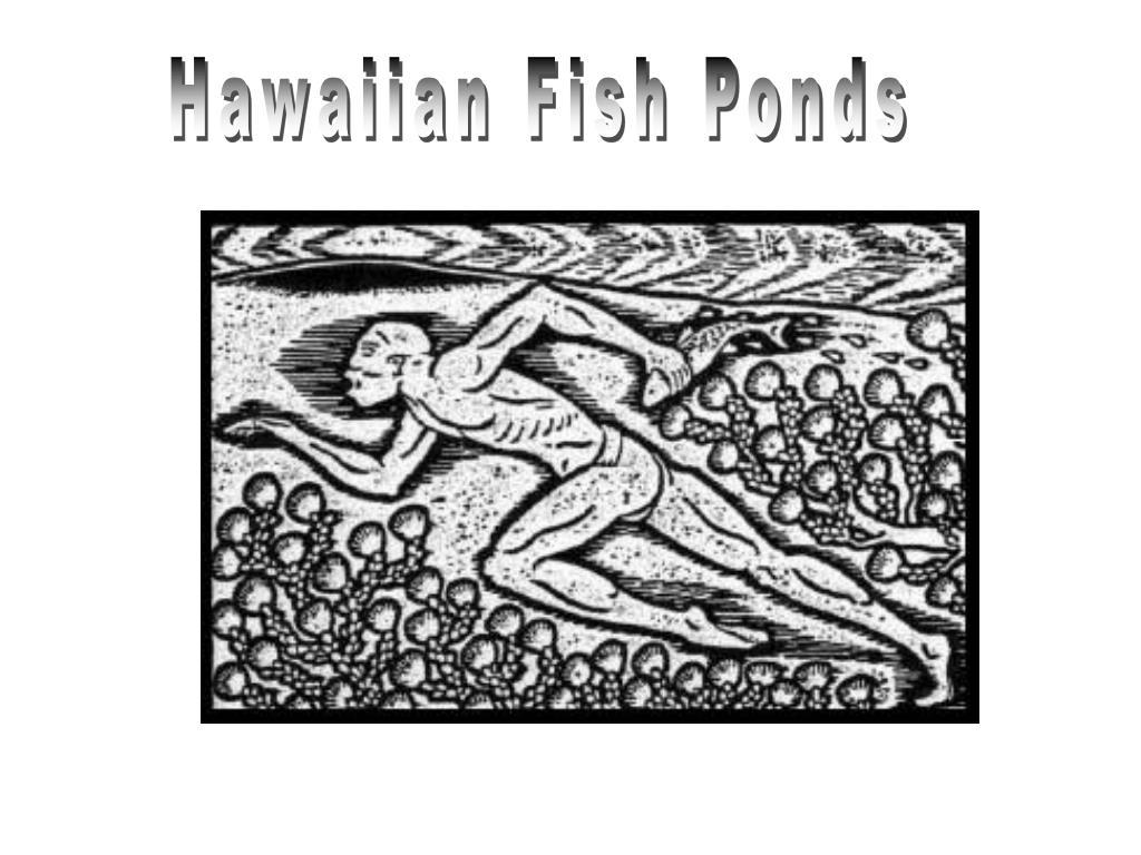 Hawaiian Fish Ponds