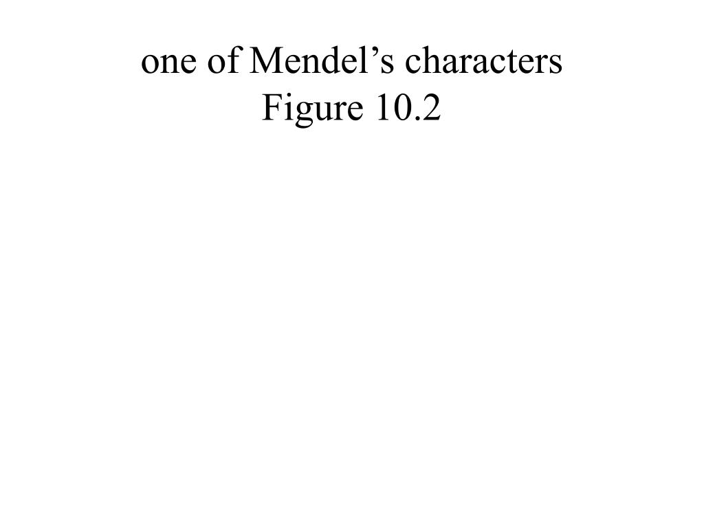 one of Mendel's characters