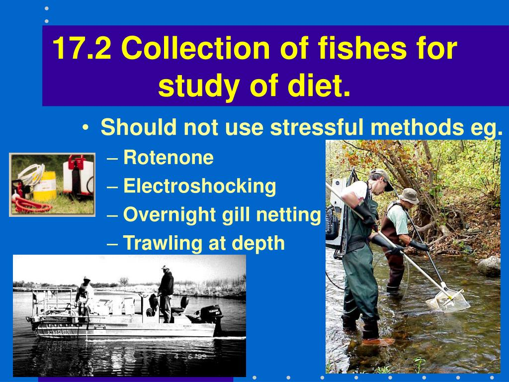 17.2 Collection of fishes for study of diet.