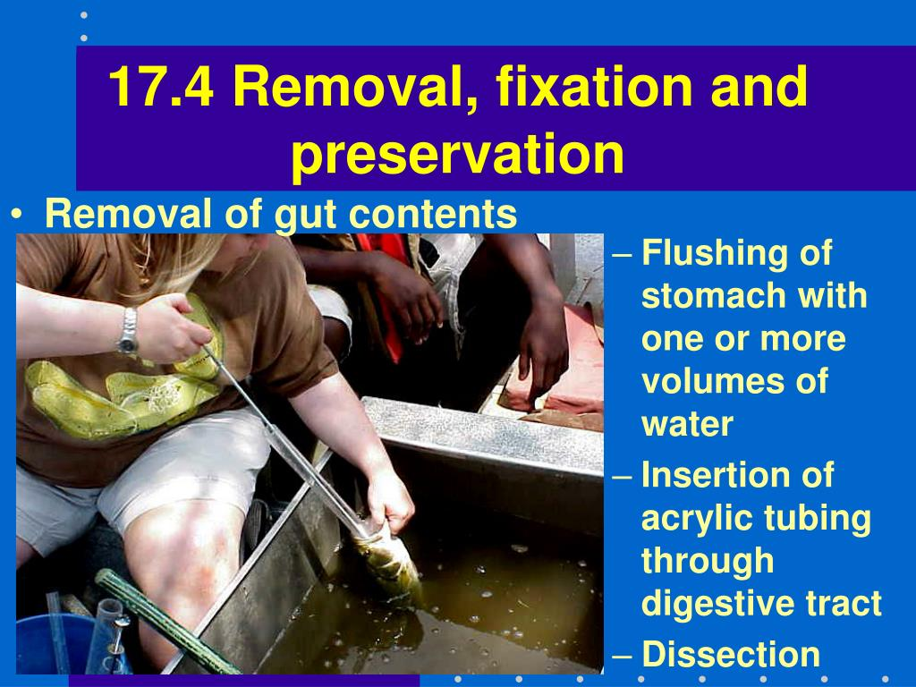 17.4 Removal, fixation and preservation