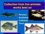 collection from live animals works best on