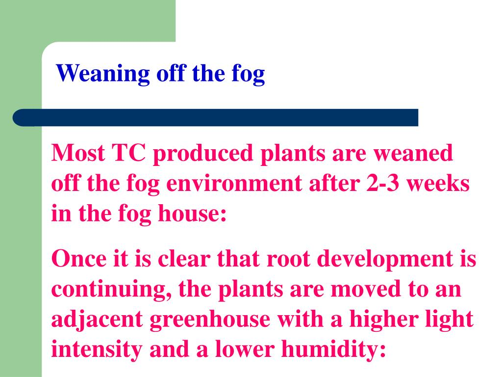 Weaning off the fog