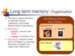 long term memory organization