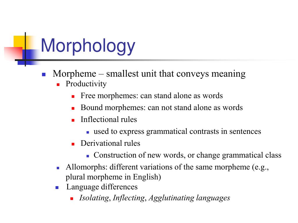 Morphology