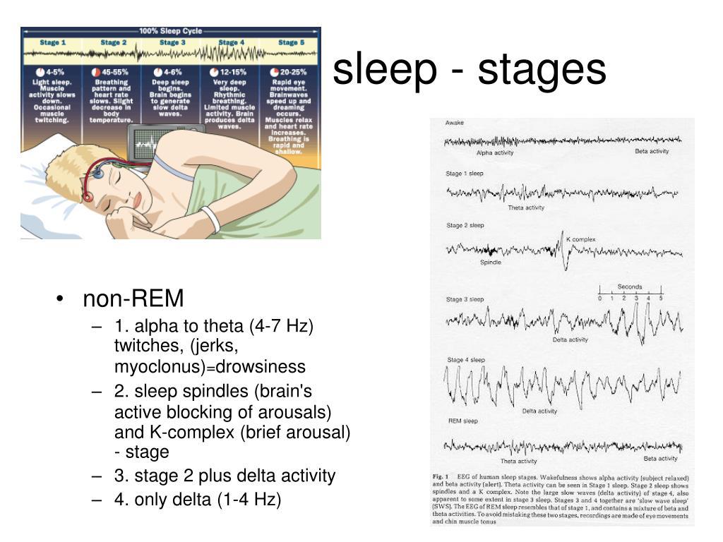 sleep - stages