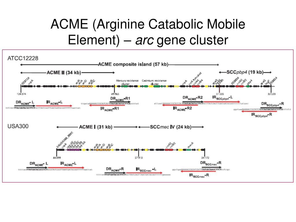 ACME (Arginine Catabolic Mobile Element) –