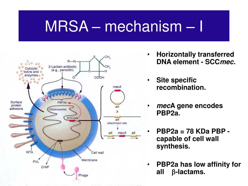 MRSA – mechanism – I