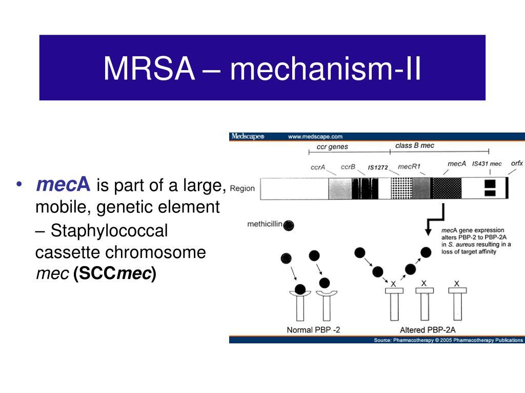 MRSA – mechanism-II