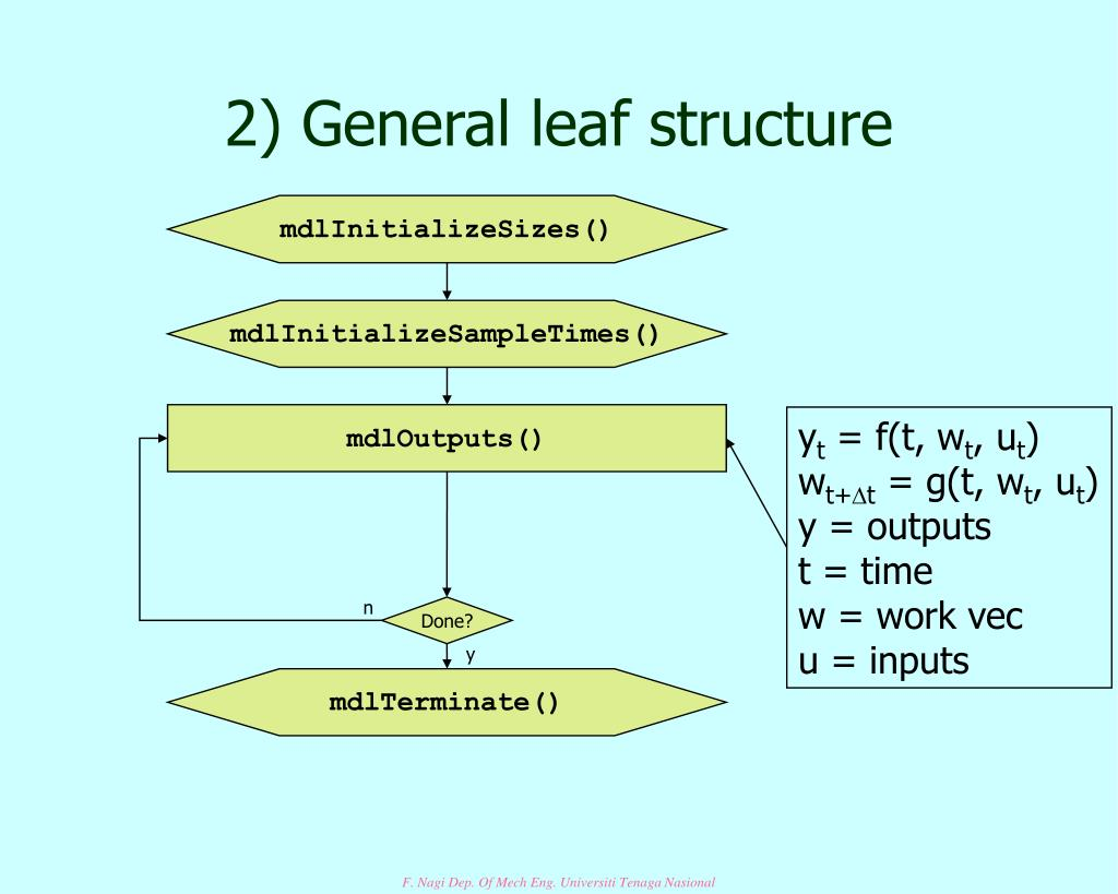 2) General leaf structure