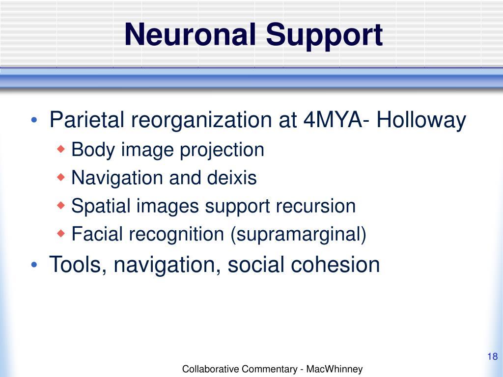 Neuronal Support
