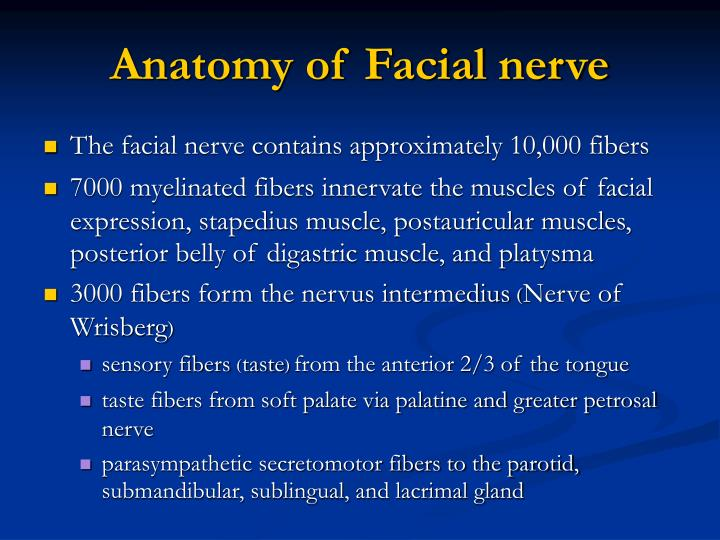 Facial Nerve Anatomy Ppt
