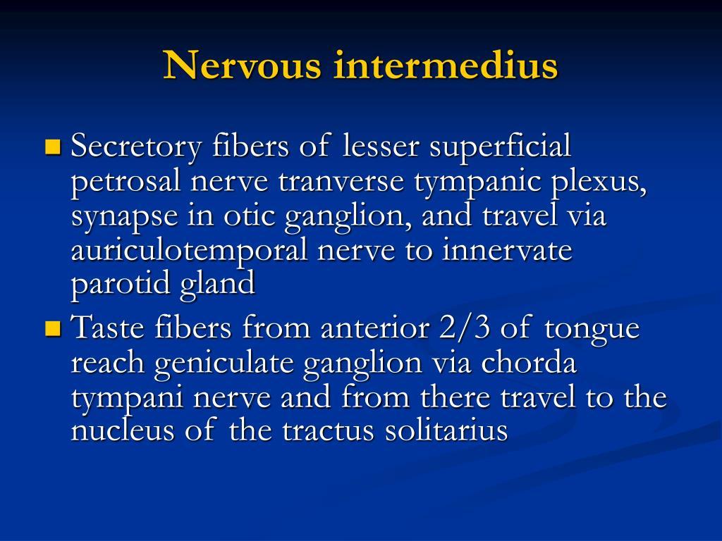 Nervous intermedius