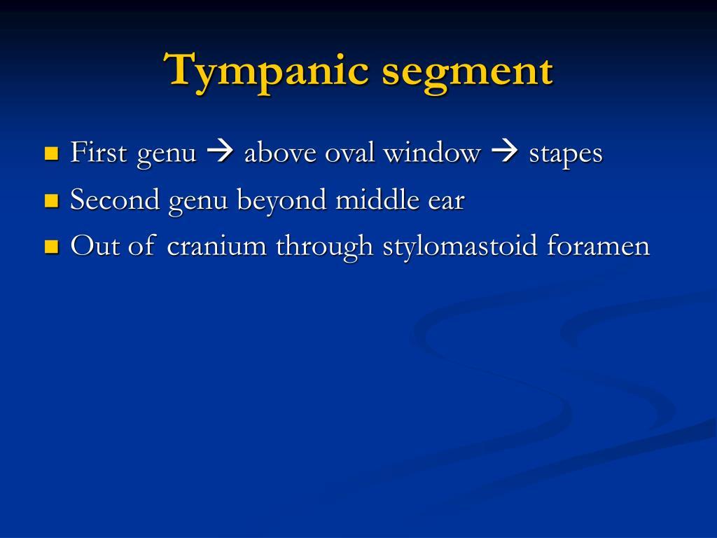 Tympanic segment