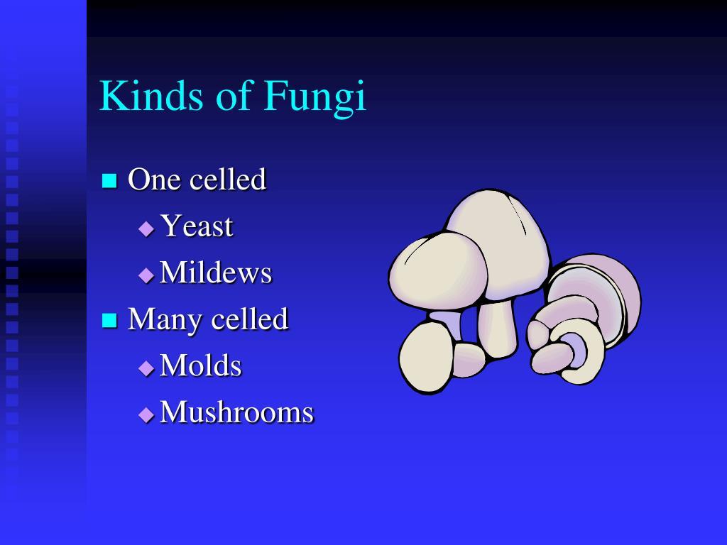 Kinds of Fungi