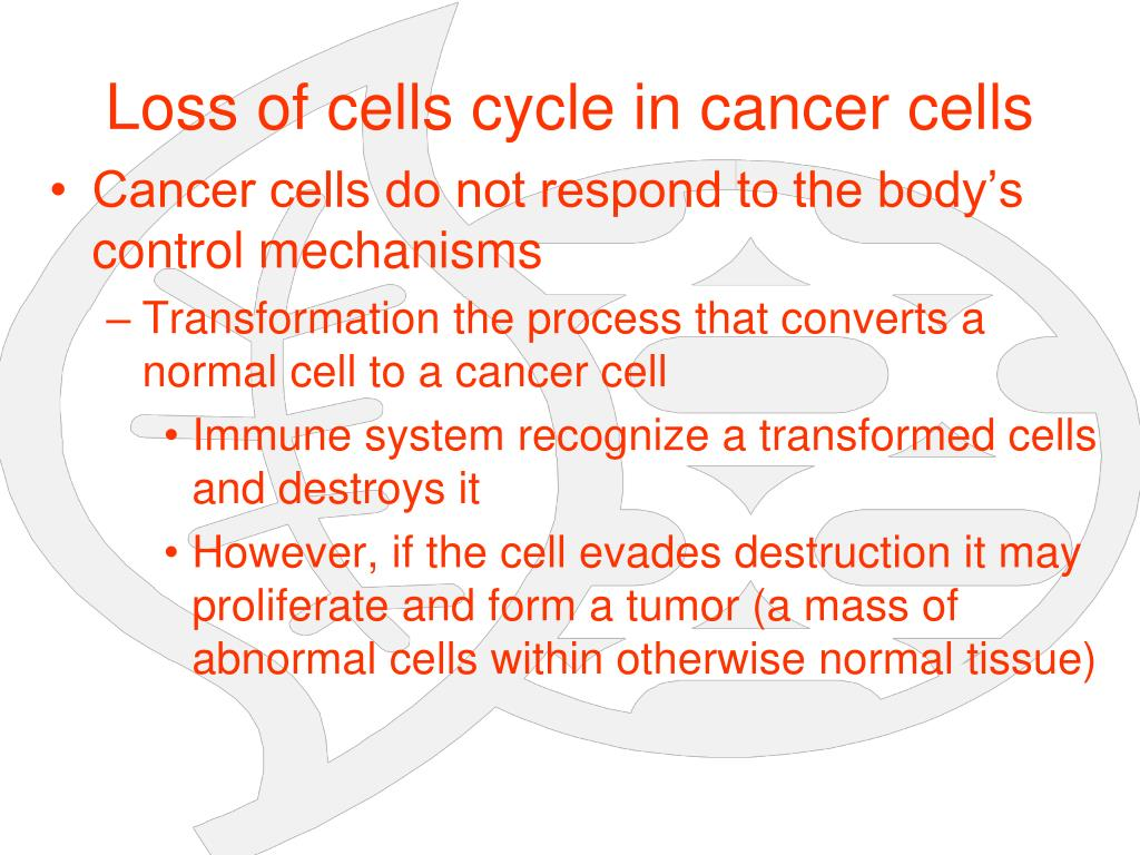 Loss of cells cycle in cancer cells