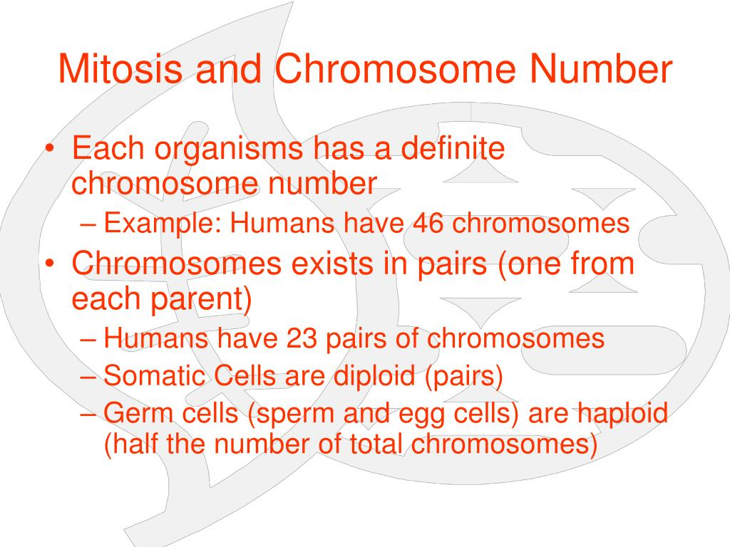 Mitosis and Chromosome Number