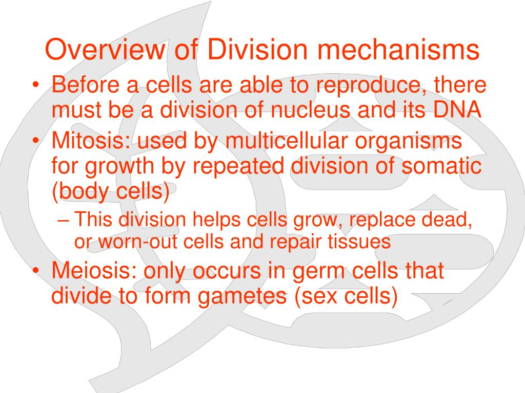 Overview of Division mechanisms