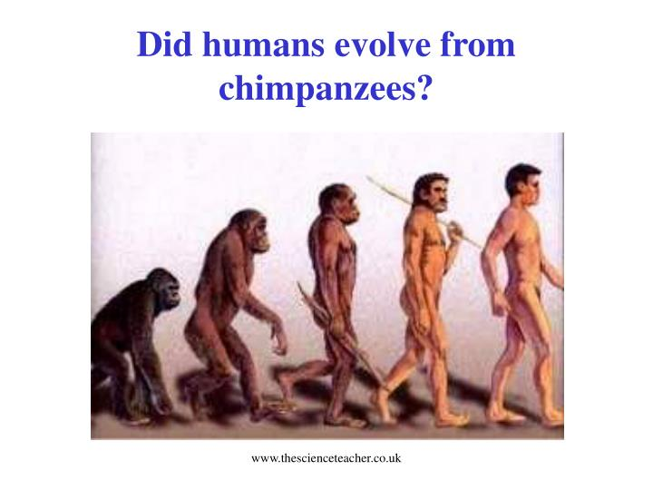 Did humans evolve from chimpanzees?