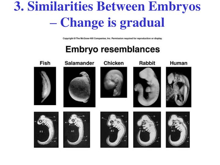 3. Similarities Between Embryos – Change is gradual