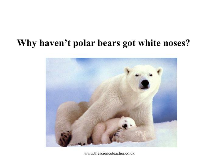 Why haven't polar bears got white noses?
