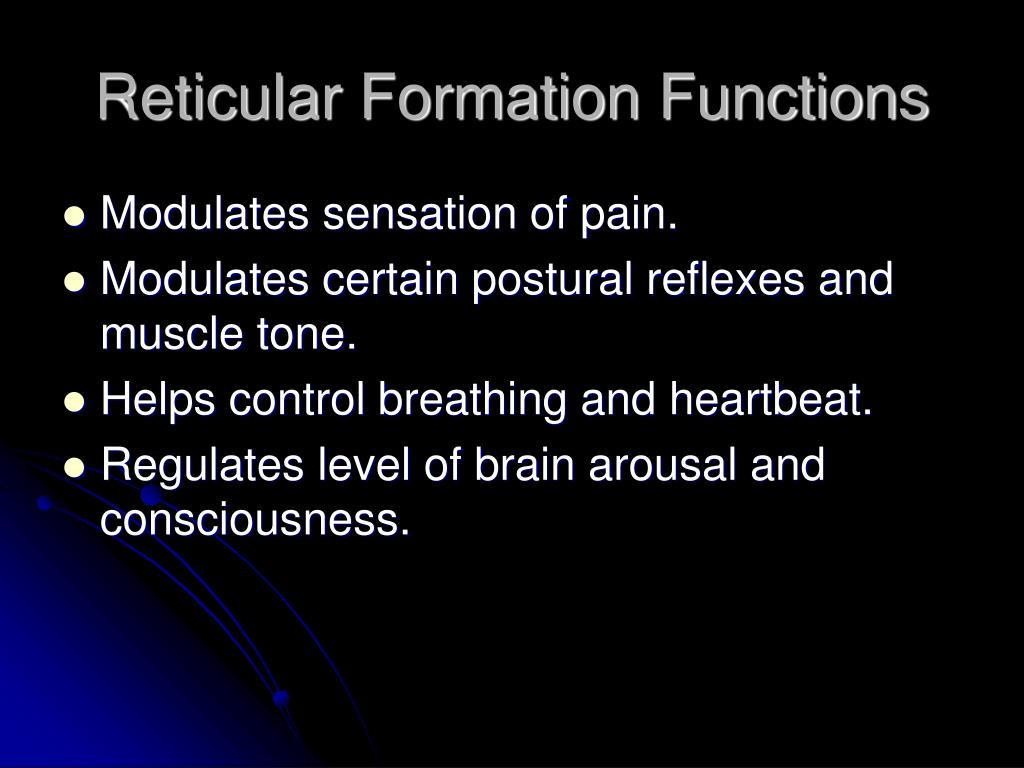 function of reticular formation What is reticular formation what does reticular formation mean reticular formation meaning - reticular formation definition - reticular formation explanati.