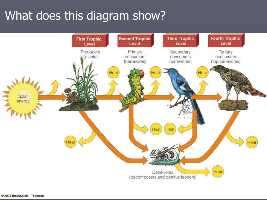 Ppt - Chapter 5  Evolution And Community Ecology Powerpoint Presentation