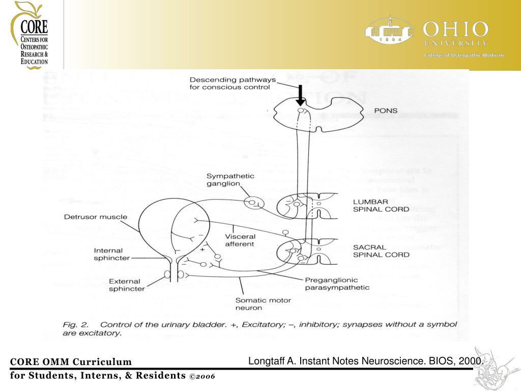 Longtaff A. Instant Notes Neuroscience. BIOS, 2000.