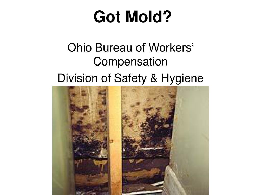 Got Mold?