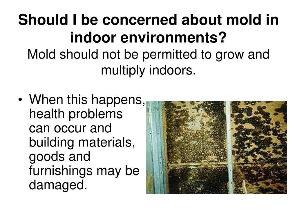 Should I be concerned about mold in indoor environments?