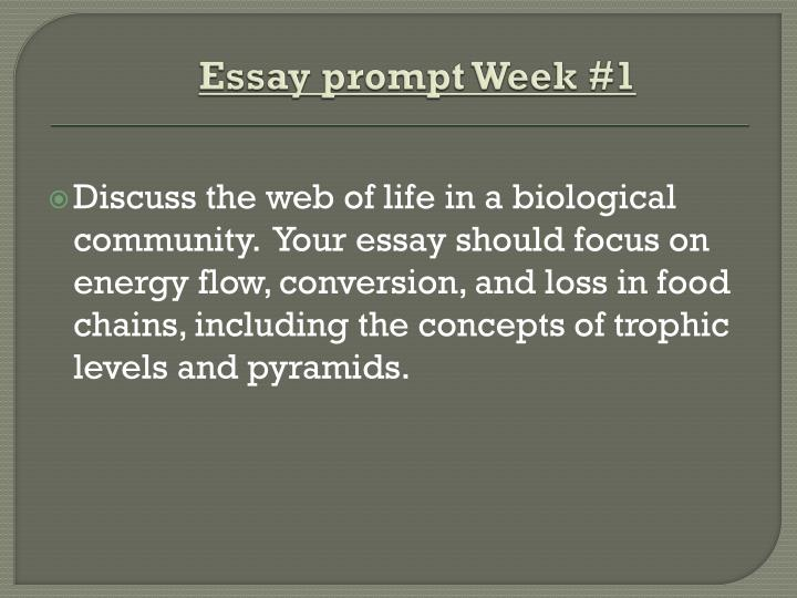 web of life essay