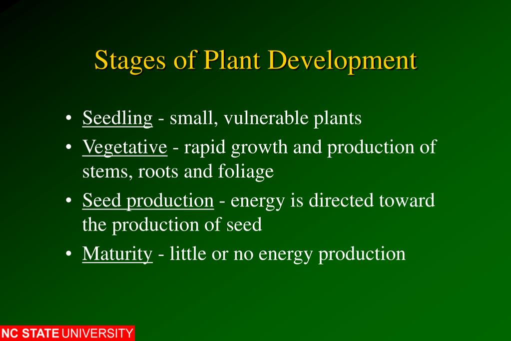 Stages of Plant Development