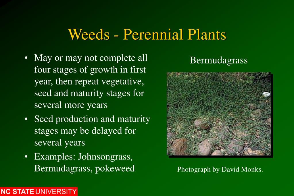 Weeds - Perennial Plants